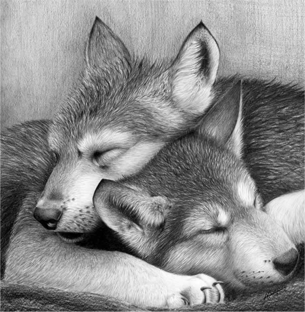 40 Beautiful Animal Sketches  (38)