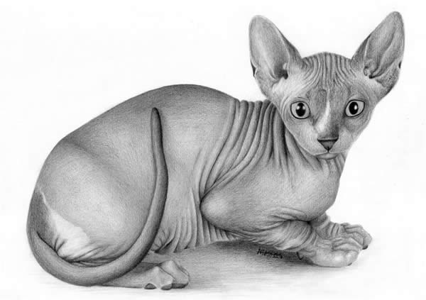 40 Beautiful Animal Sketches  (39)
