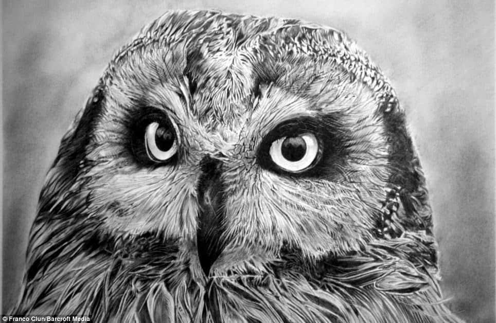 realistic drawings sketches animals animal pencil drawing owl detailed hyper most draw inspiration drawn franco amazing ever sketch face simple