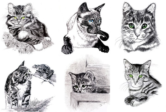 animal drawings sketches cat drawing realistic animals inspiration ink cats notecards exquisite dog sketch ross boyd pencil giveaway catster pen