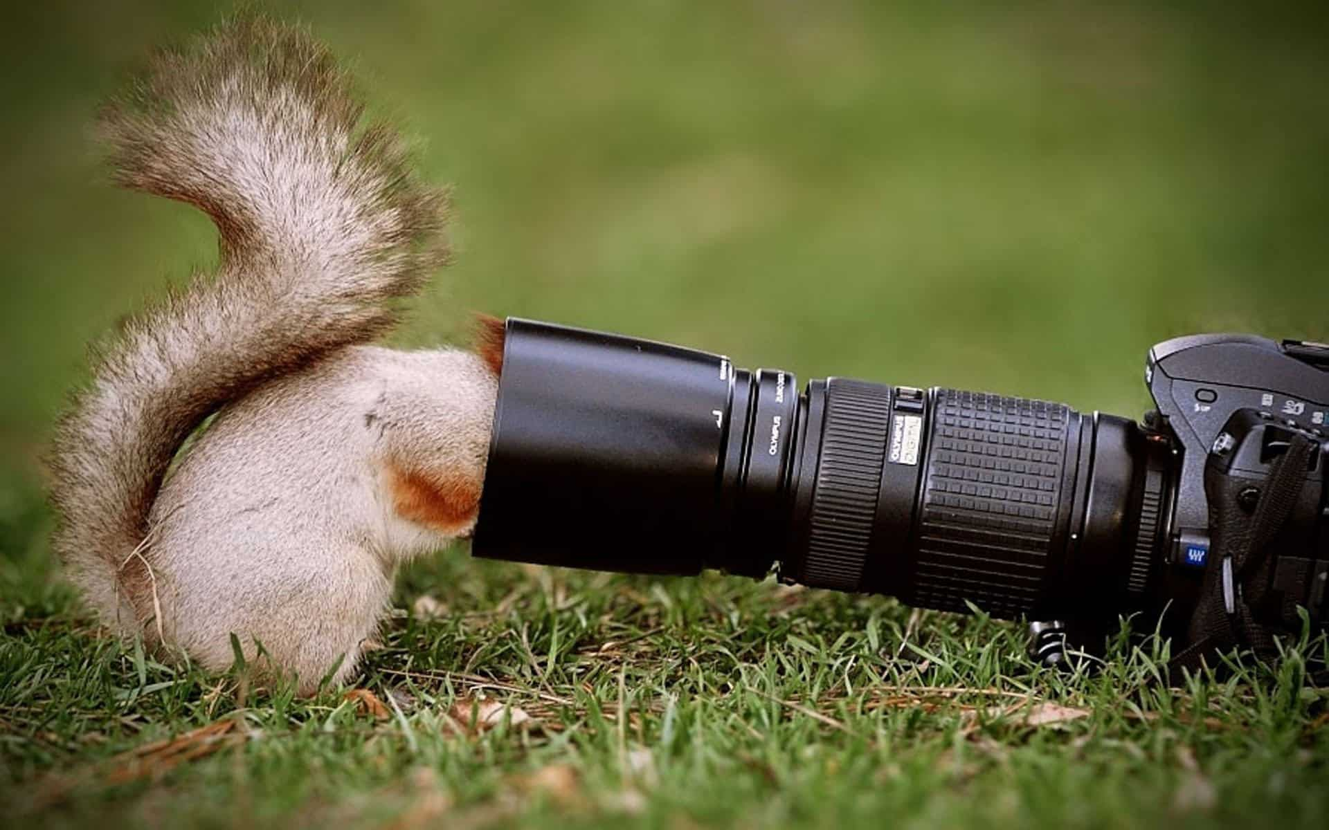 40 Beautiful Pictures of Animals Playing Peekaboo  (14)