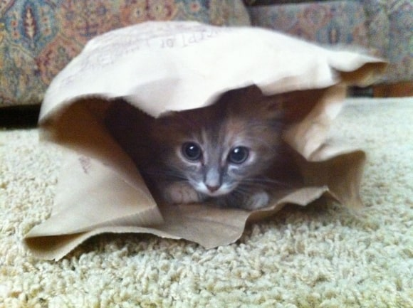 40 Beautiful Pictures of Animals Playing Peekaboo  (18)