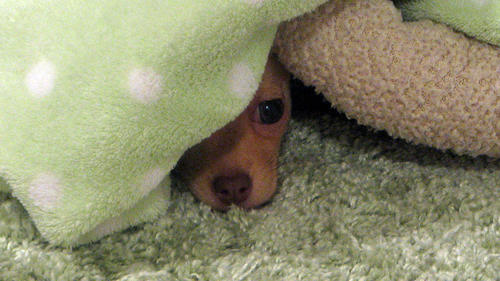 40 Beautiful Pictures of Animals Playing Peekaboo  (26)