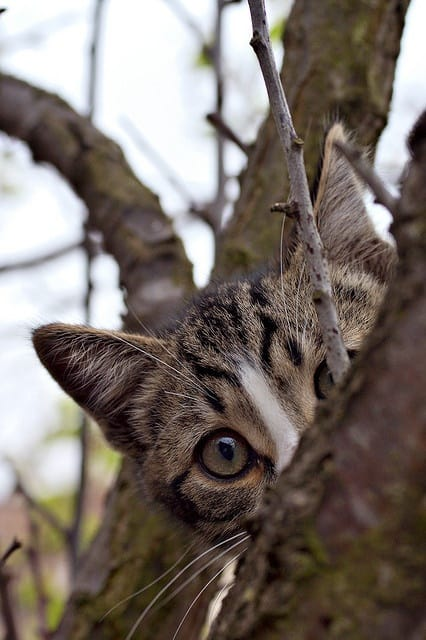 40 Beautiful Pictures of Animals Playing Peekaboo  (27)