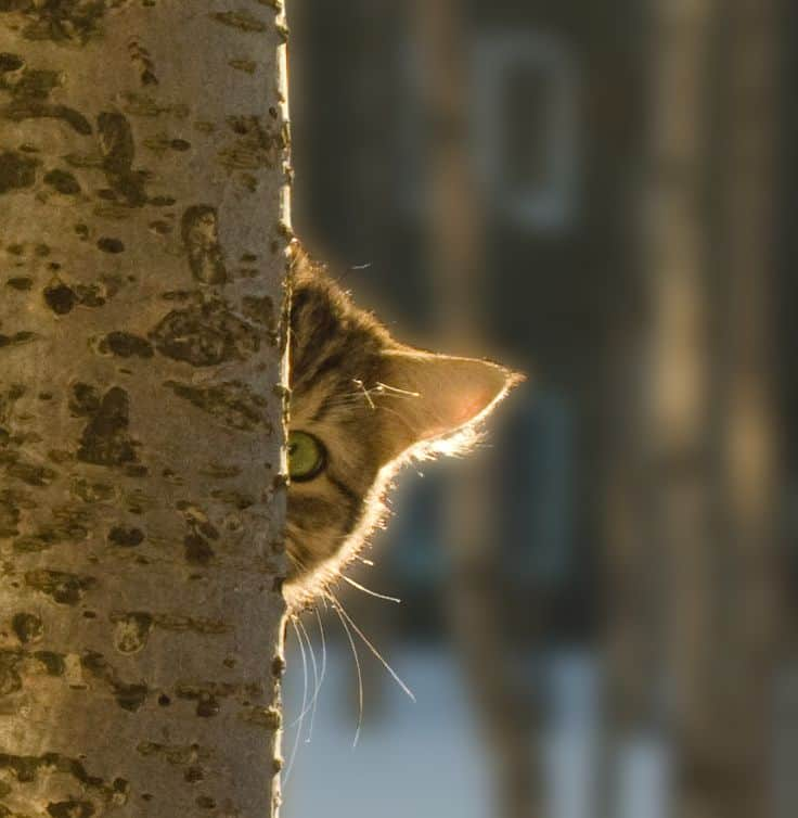 40 Beautiful Pictures of Animals Playing Peekaboo  (30)