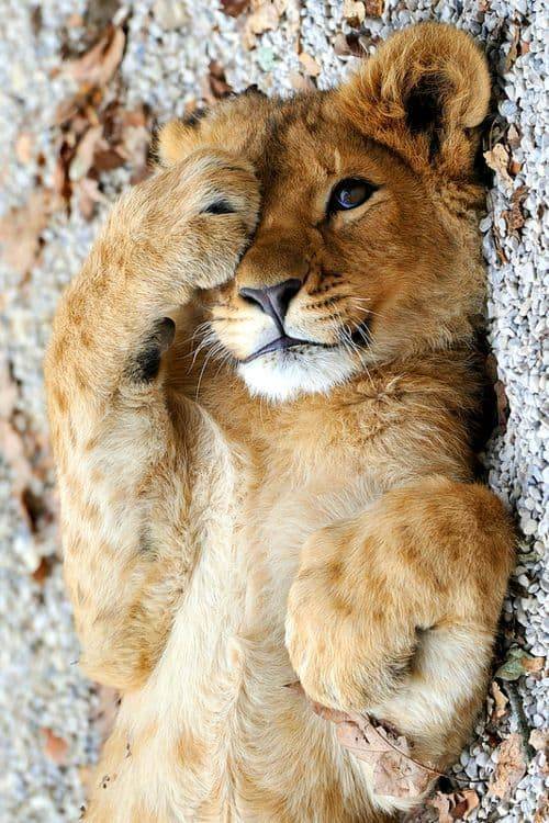 40 Beautiful Pictures of Animals Playing Peekaboo  (32)