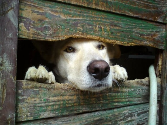 40 Beautiful Pictures of Animals Playing Peekaboo  (6)