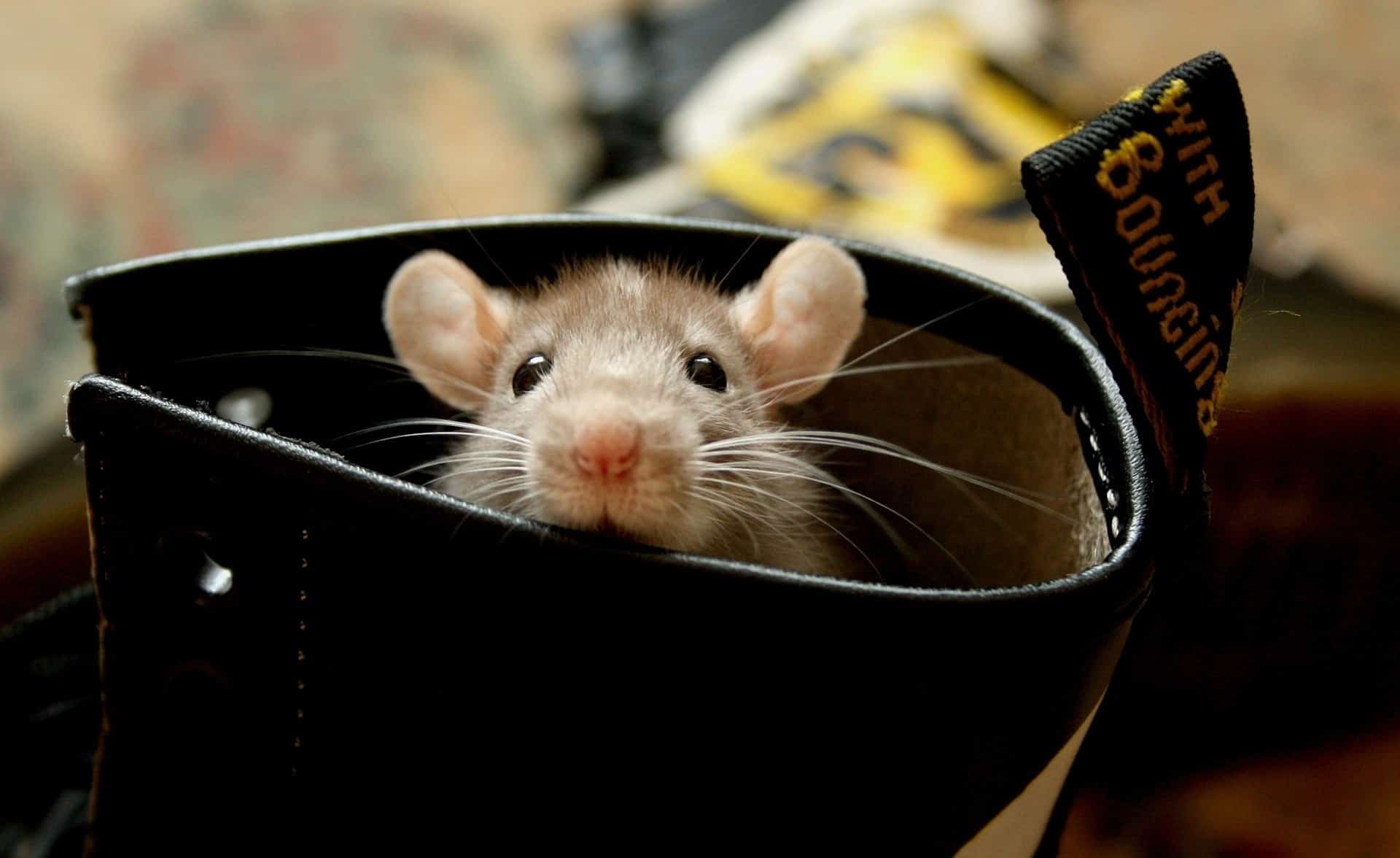 40 Beautiful Pictures of Animals Playing Peekaboo  (9)