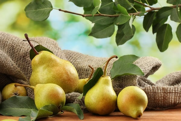 Fruits that are Safe to eat for Dogs 10