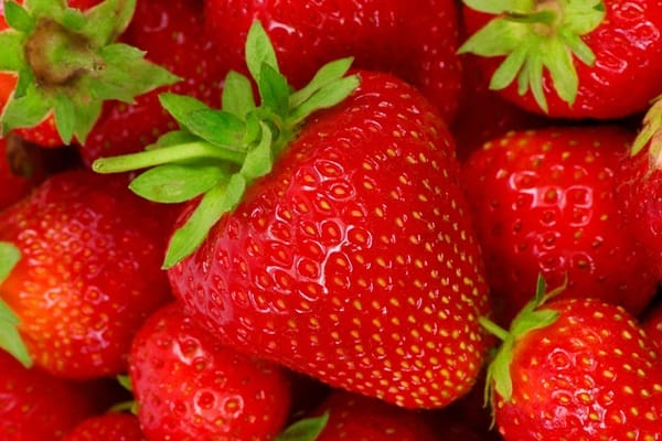 Fruits that are Safe to eat for Dogs 6