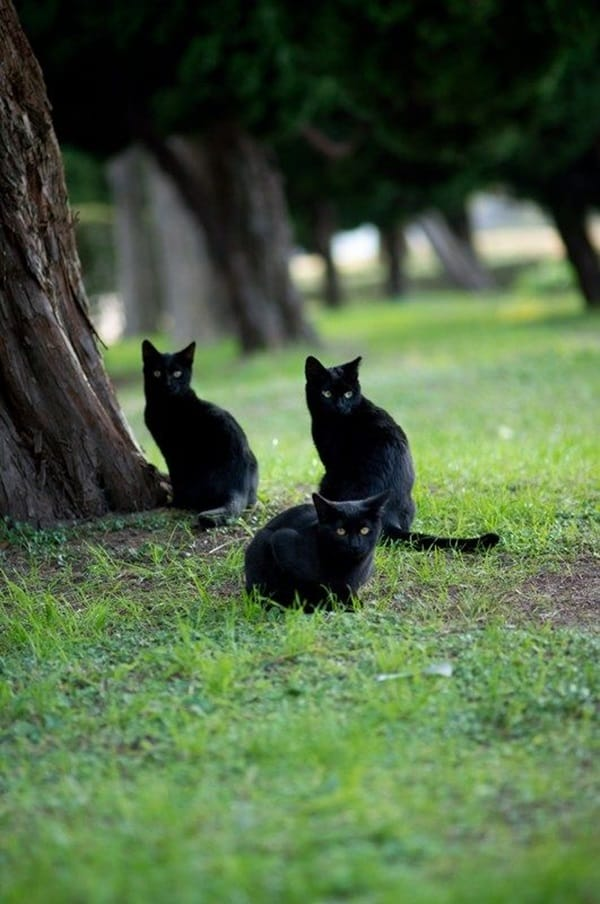Black Cat Pictures (1)