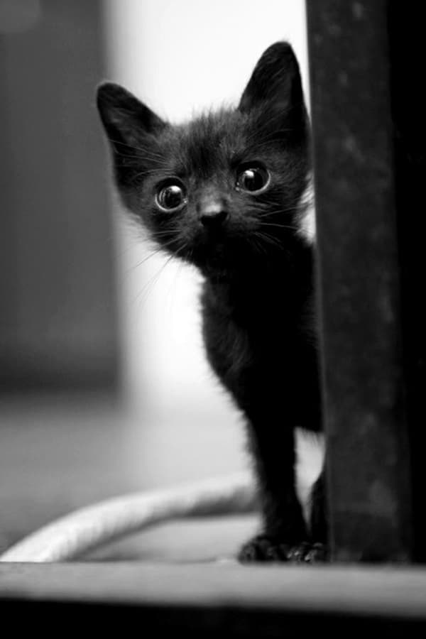 Black Cat Pictures (12)