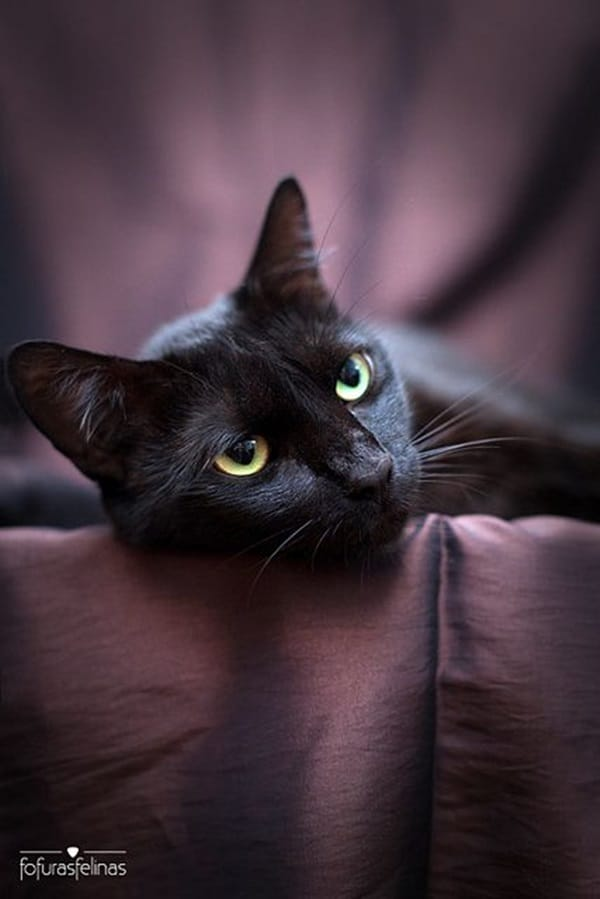 Black Cat Pictures (13)