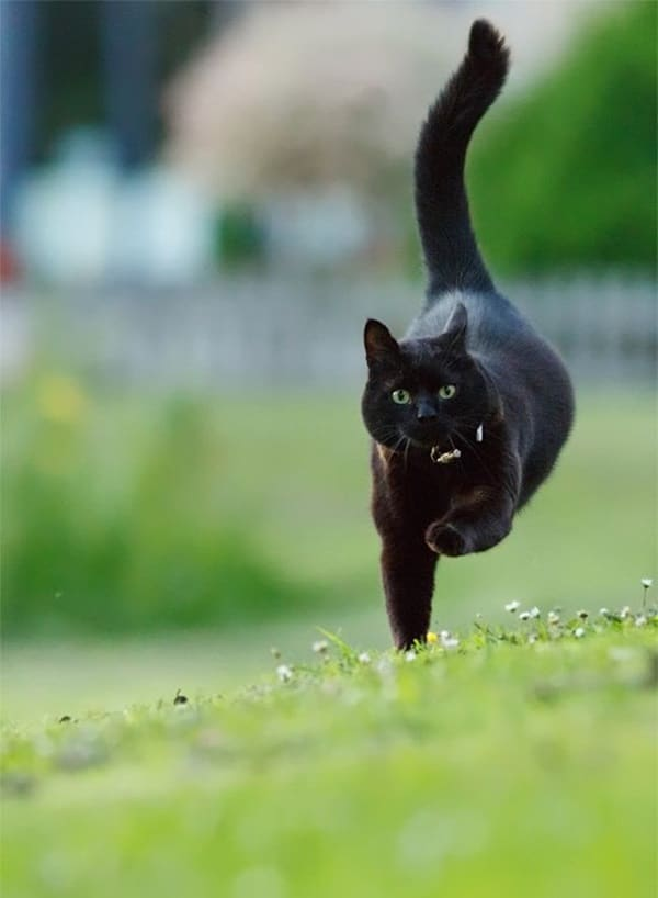 Black Cat Pictures (15)