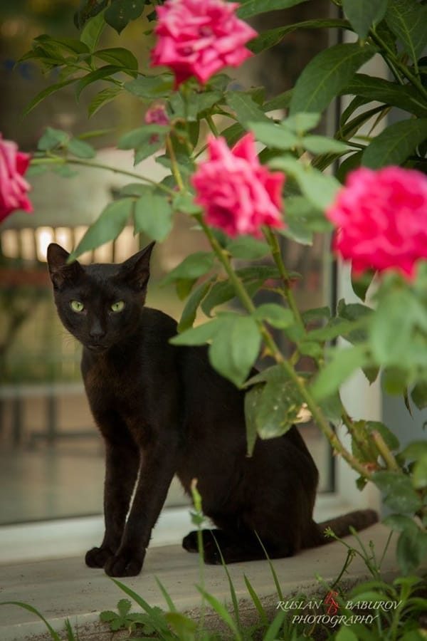 Black Cat Pictures (32)