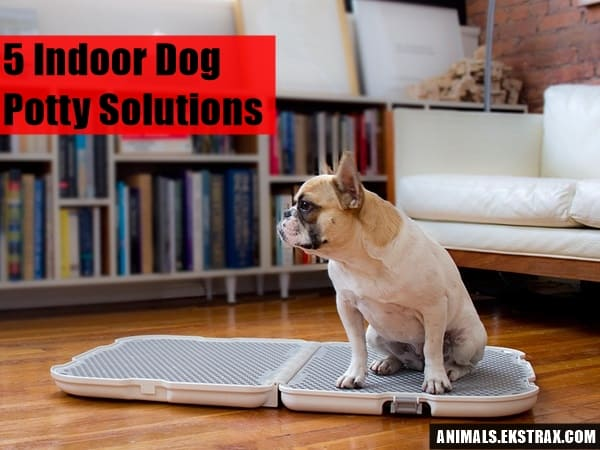 Indoor Dog Potty Solutions That Will Free You From The Leash - Indoor dog bathroom solutions