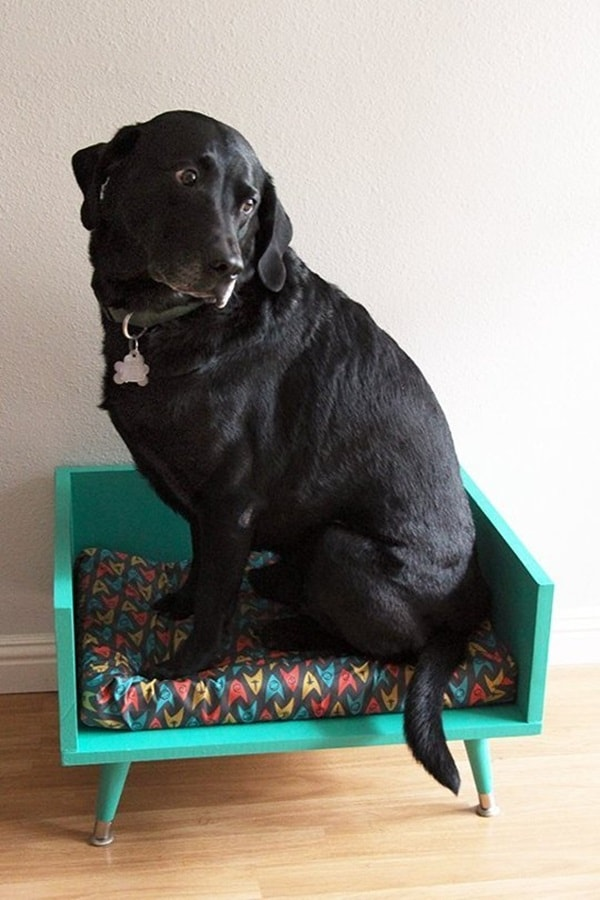 15 Creative DIY Dog Projects 14
