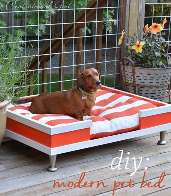 15 Creative DIY Dog Projects 3