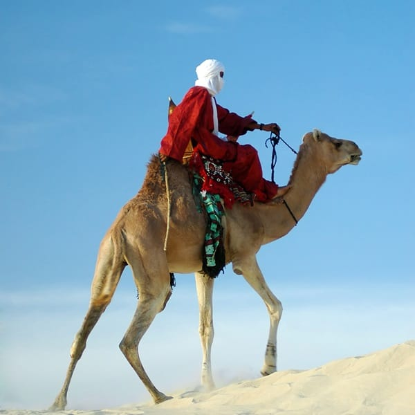 20 Beautiful Camel Pictures 23
