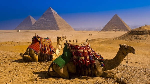 Camels near Great Pyramids of Giza --- Image by © Blaine Harrington III/Corbis