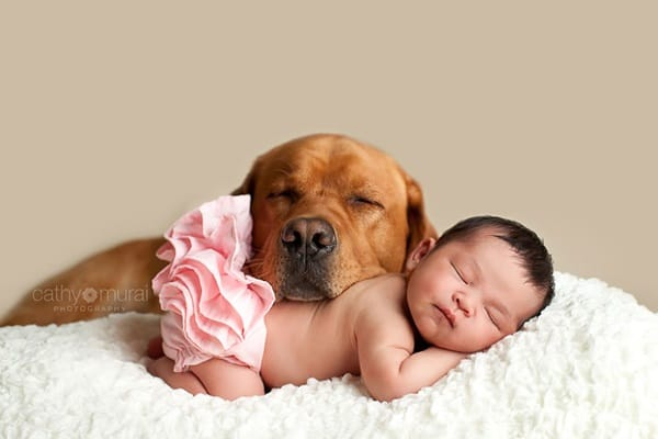 20 Big Dogs with Babies 1