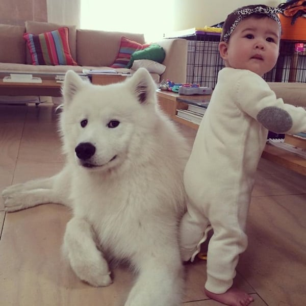20 Big Dogs with Babies 10