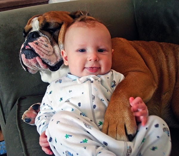 20 Big Dogs with Babies 11