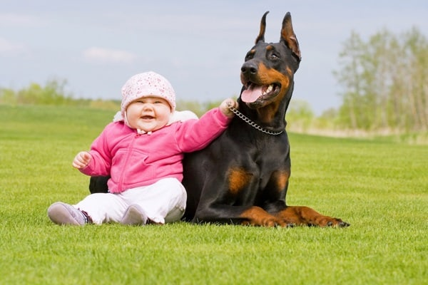 20 Big Dogs with Babies 12