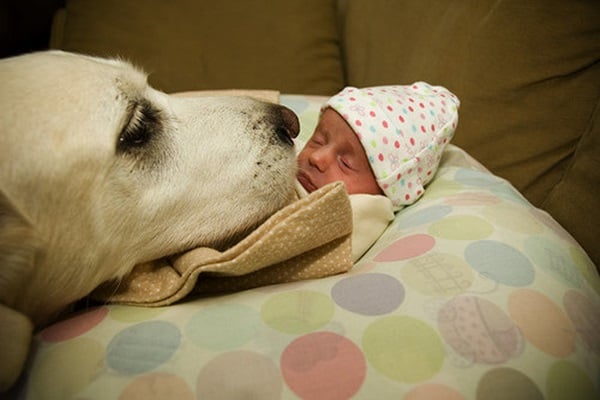 20 Big Dogs with Babies 13