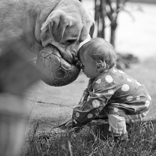 20 Big Dogs with Babies 14
