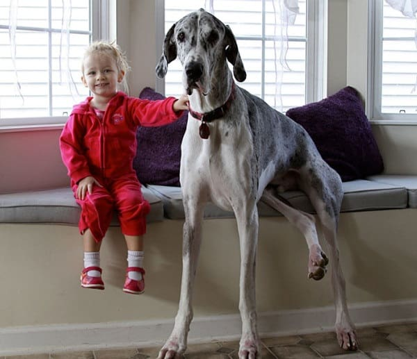 20 Big Dogs with Babies 15