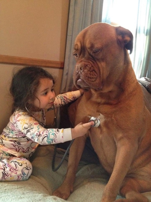 20 Big Dogs with Babies 16