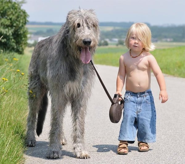 20 Big Dogs with Babies 17