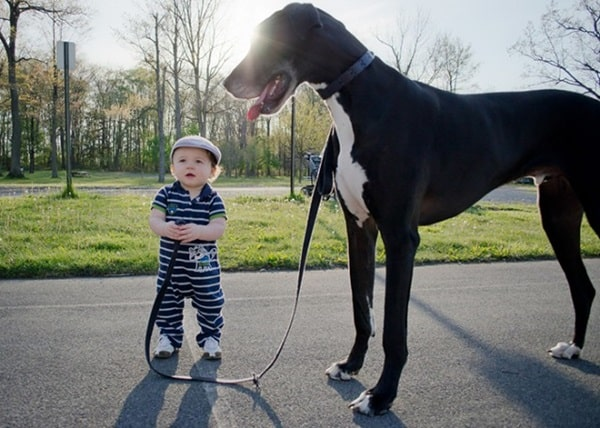 20 Big Dogs with Babies 2