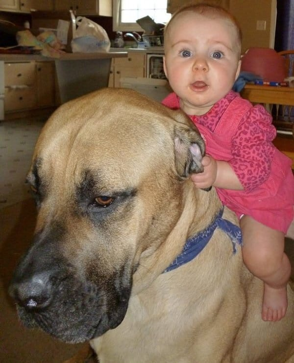 20 Big Dogs with Babies 20