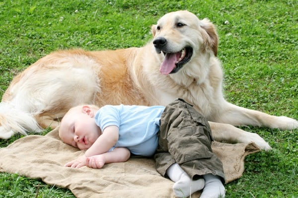 20 Big Dogs with Babies 21