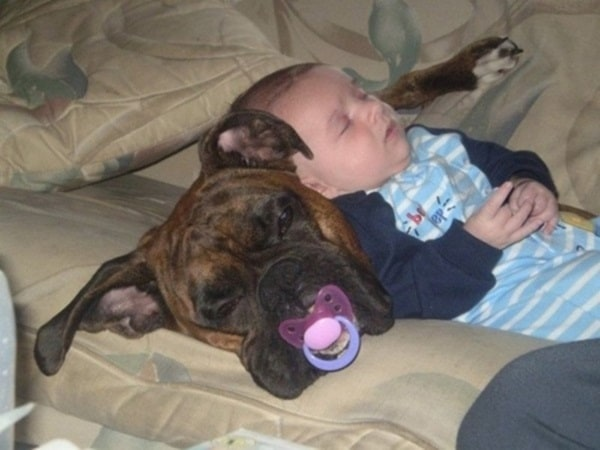 20 Big Dogs with Babies 22