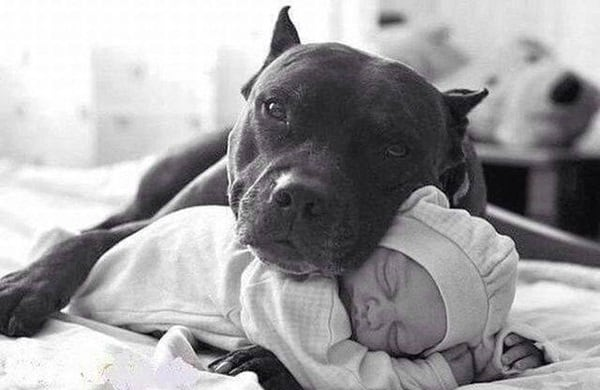 20 Big Dogs with Babies 24