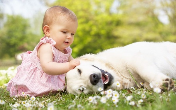 20 Big Dogs with Babies 25
