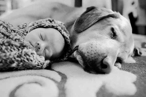 20 Big Dogs with Babies 26