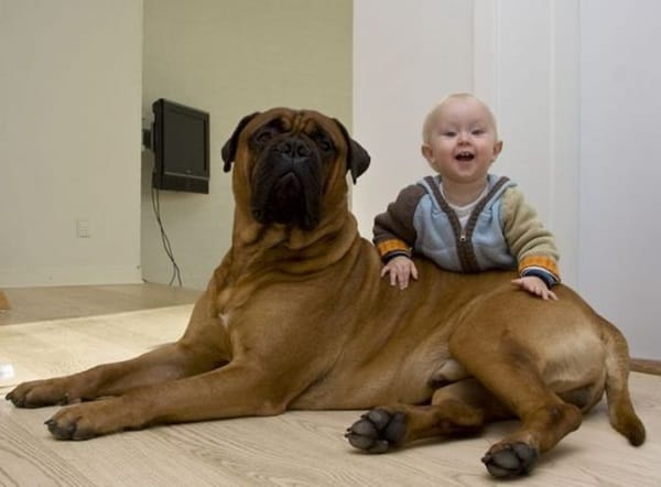 20 Big Dogs with Babies 27
