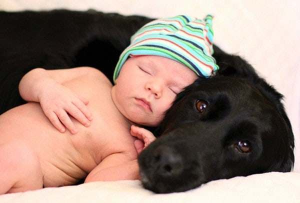 20 Big Dogs with Babies 28