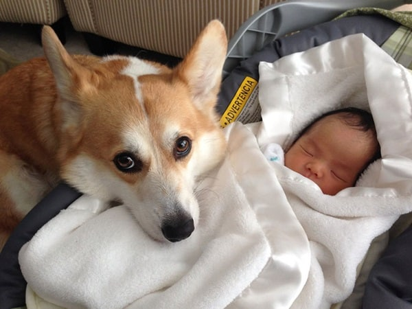 20 Big Dogs with Babies 29