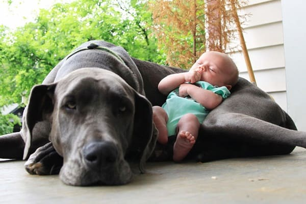 20 Big Dogs with Babies 3