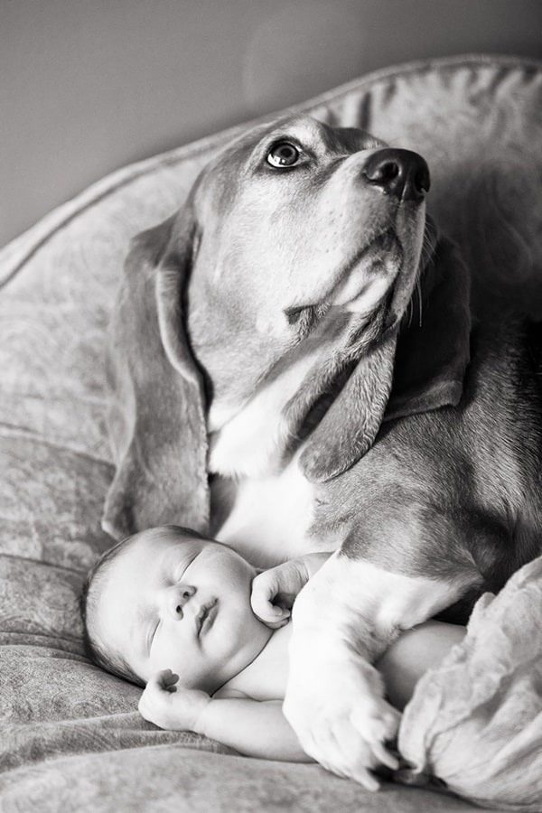 20 Big Dogs with Babies 30