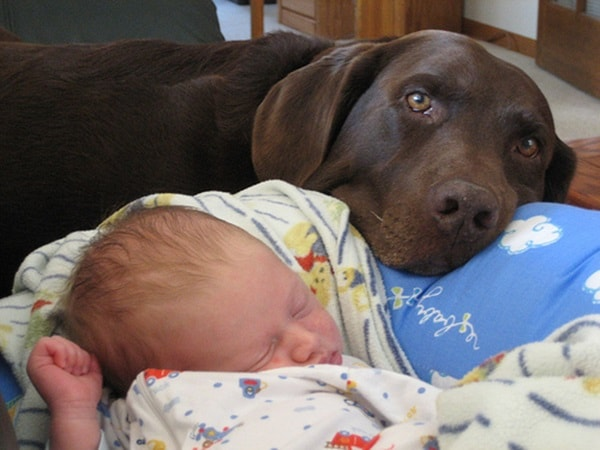 20 Big Dogs with Babies 31