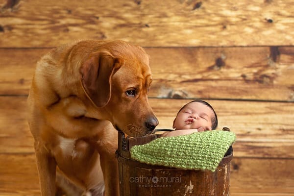 20 Big Dogs with Babies 32