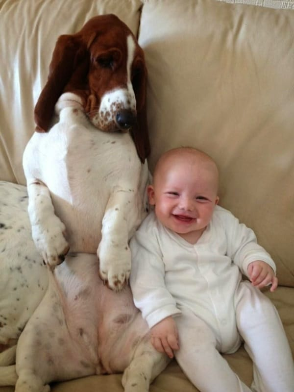 20 Big Dogs with Babies 33