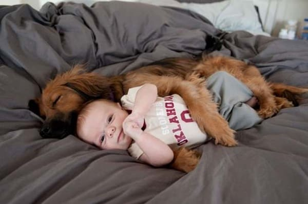 20 Big Dogs with Babies 34