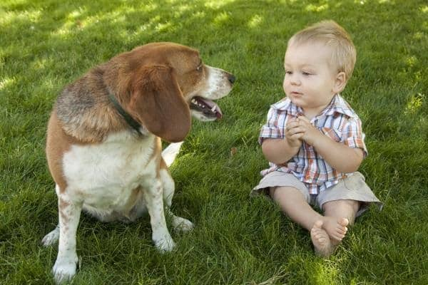 20 Big Dogs with Babies 35